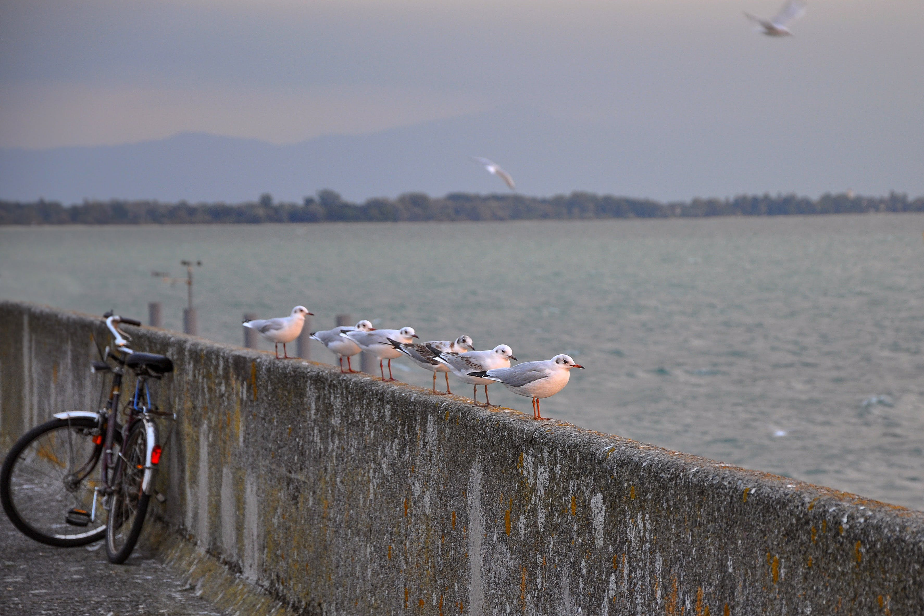 White and Grey Birds on Concrete Barrier Near Body of Water