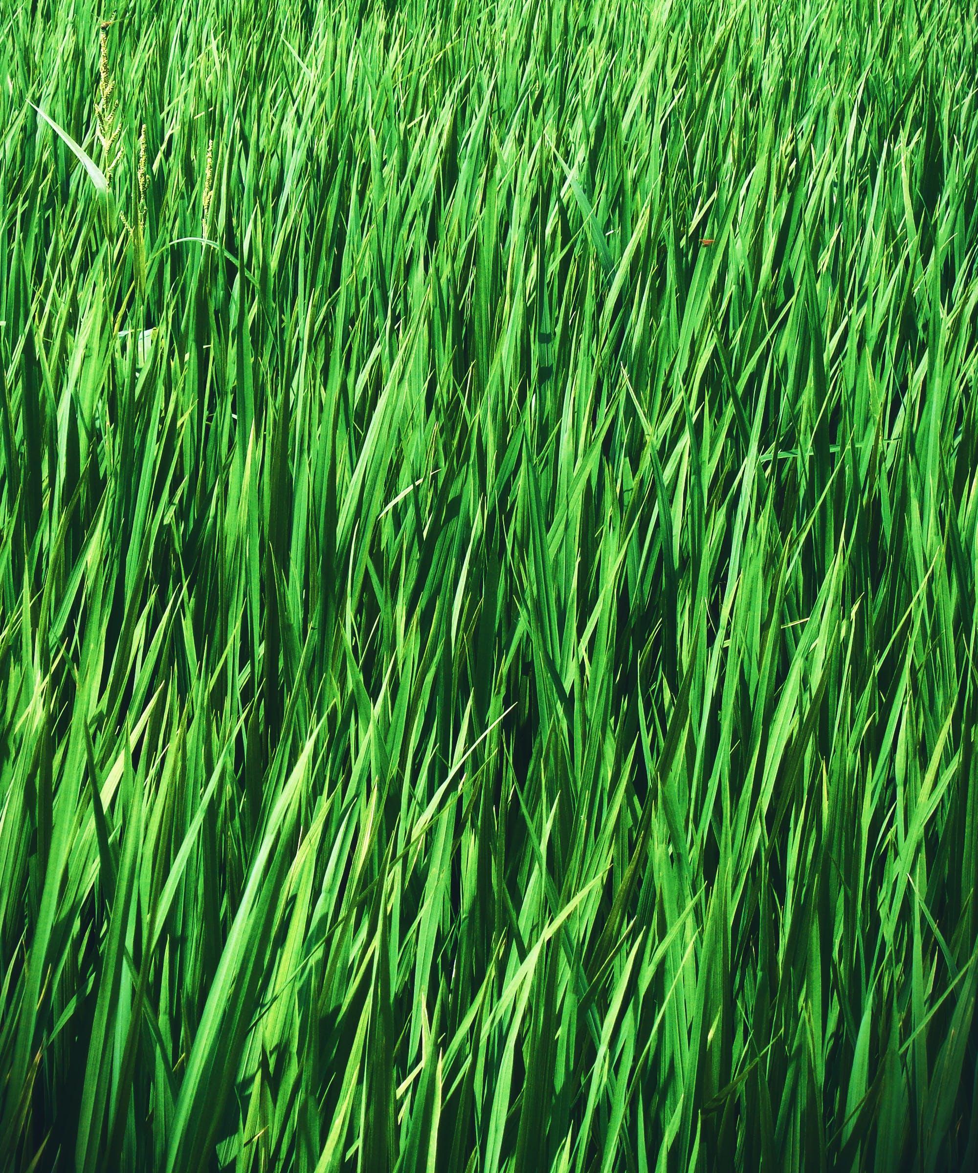 Free stock photo of Beautiful grass, farm, farmer, farmhouse