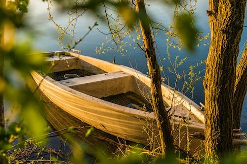 Brown Wooden Boat Near Tree