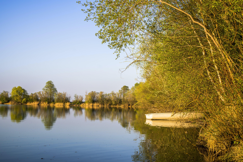Boat on Body of Water Beside Trees