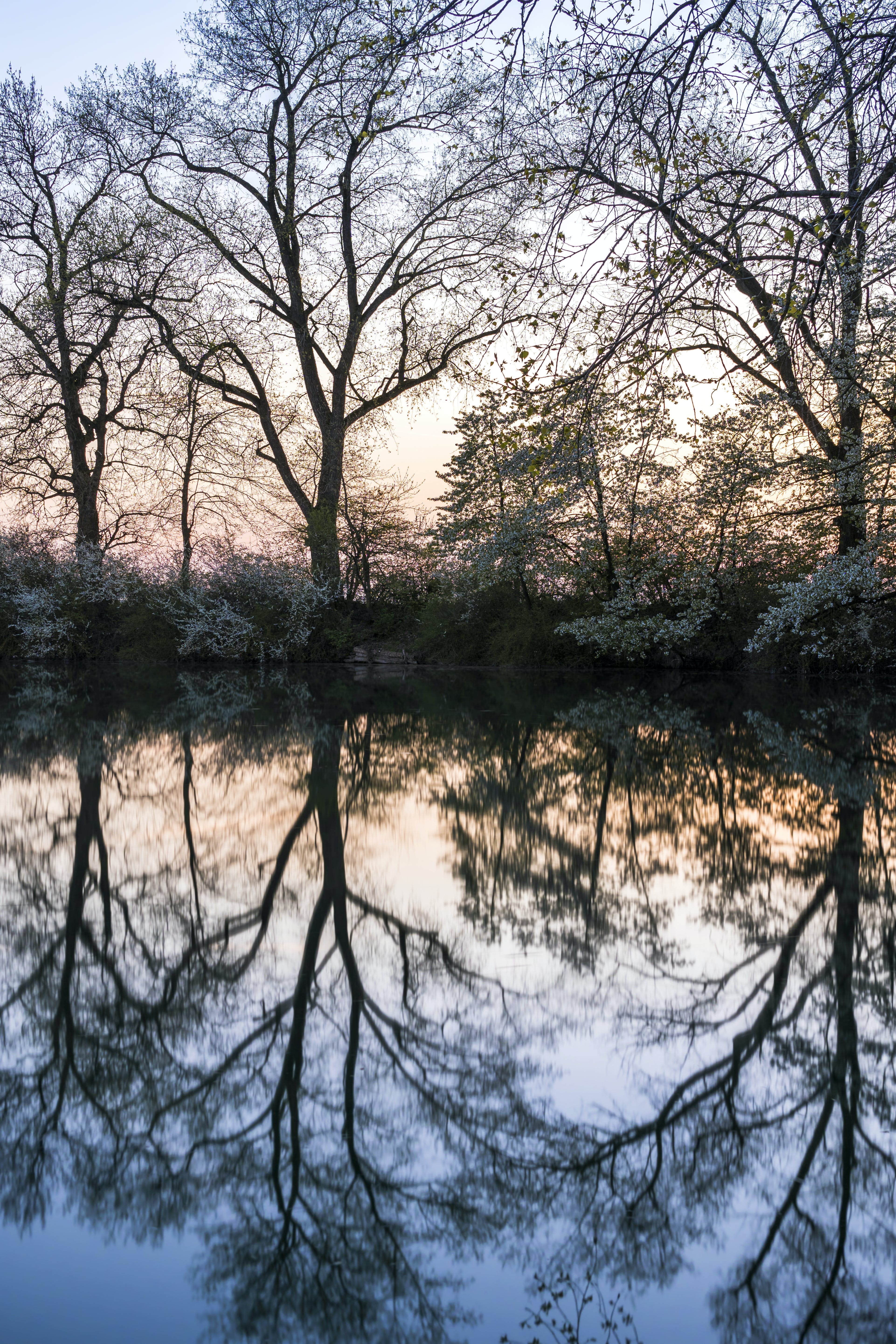 Bare Trees Near Grey Calm Body of Water at Daytime