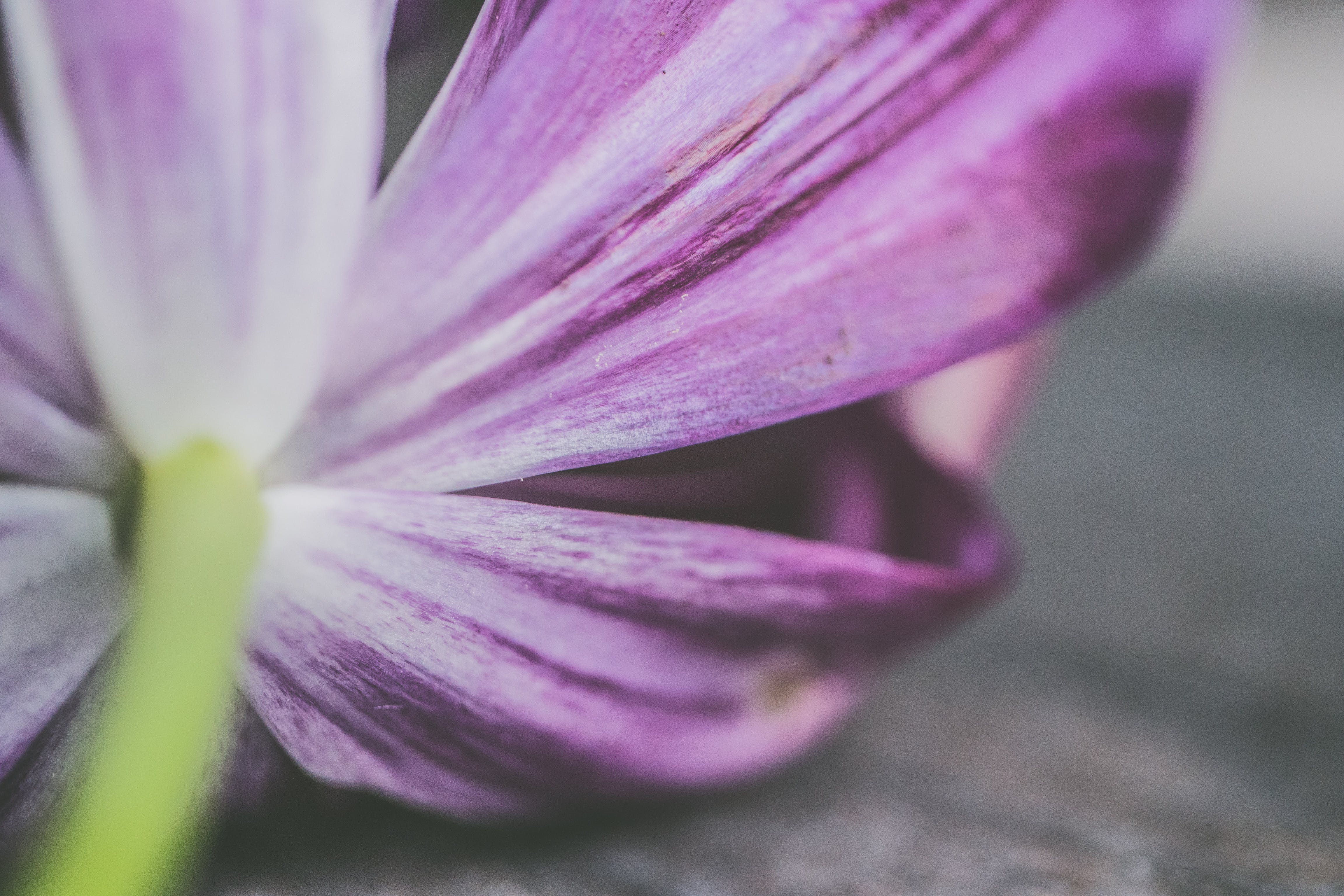 Shallow Photography of Purple Petaled Flower