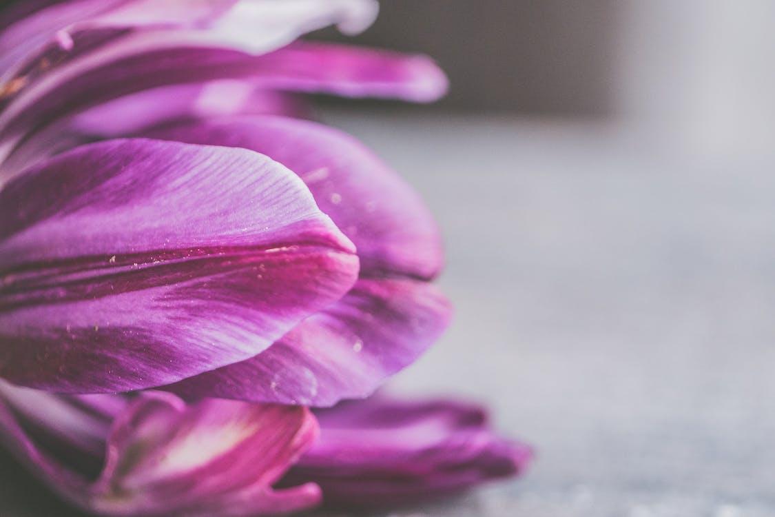 delikatny, fioletowy, flora