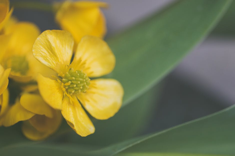 Selective focus photo of yellow flower