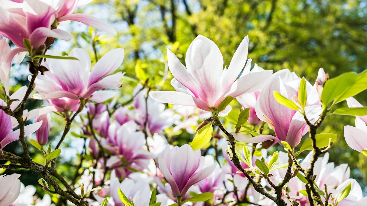 กลีบดอก, กลีบดอกไม้, การเจริญเติบโต