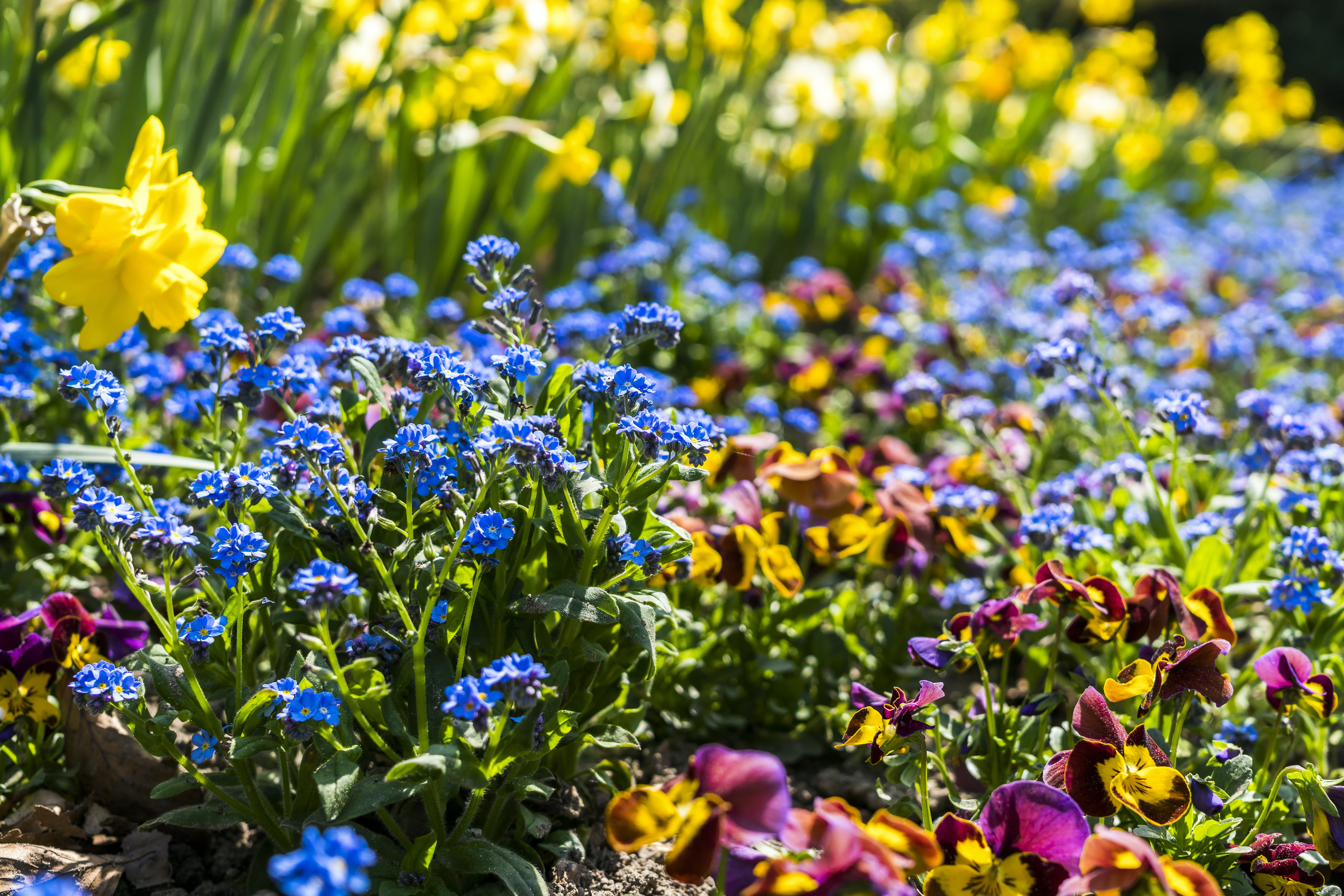Photo of Assorted-color Flowers at Daytime