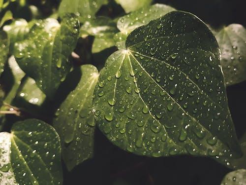 Бесплатное стоковое фото с h2o, вода, дождь, завод