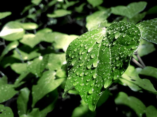 Green Leaf With Water Droplets on Top