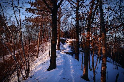 ağaç, ağaçlar, ahşap, buz içeren Ücretsiz stok fotoğraf