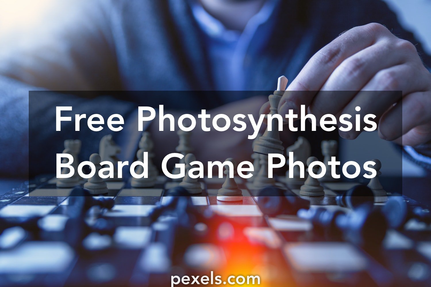 1000+ Engaging Photosynthesis Board Game Photos · Pexels