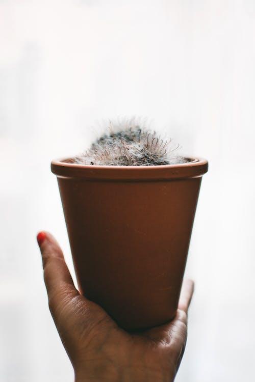 Photos gratuites de à l'intérieur, argile, arrière-plan blanc, cactus