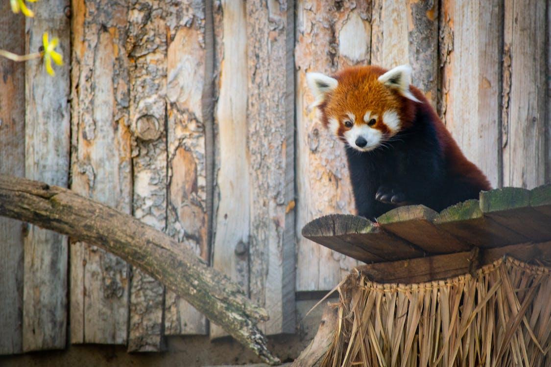 dagslys, dyr, dyrefotografering