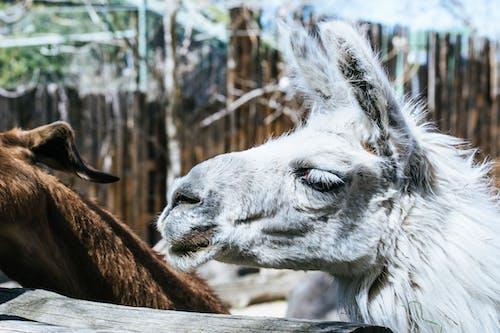 Gratis lagerfoto af close-up, dagtimer, dyr, dyrefotografering