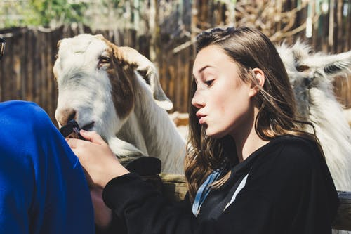 Woman Wearing Black Shirt White Goat at Daytime