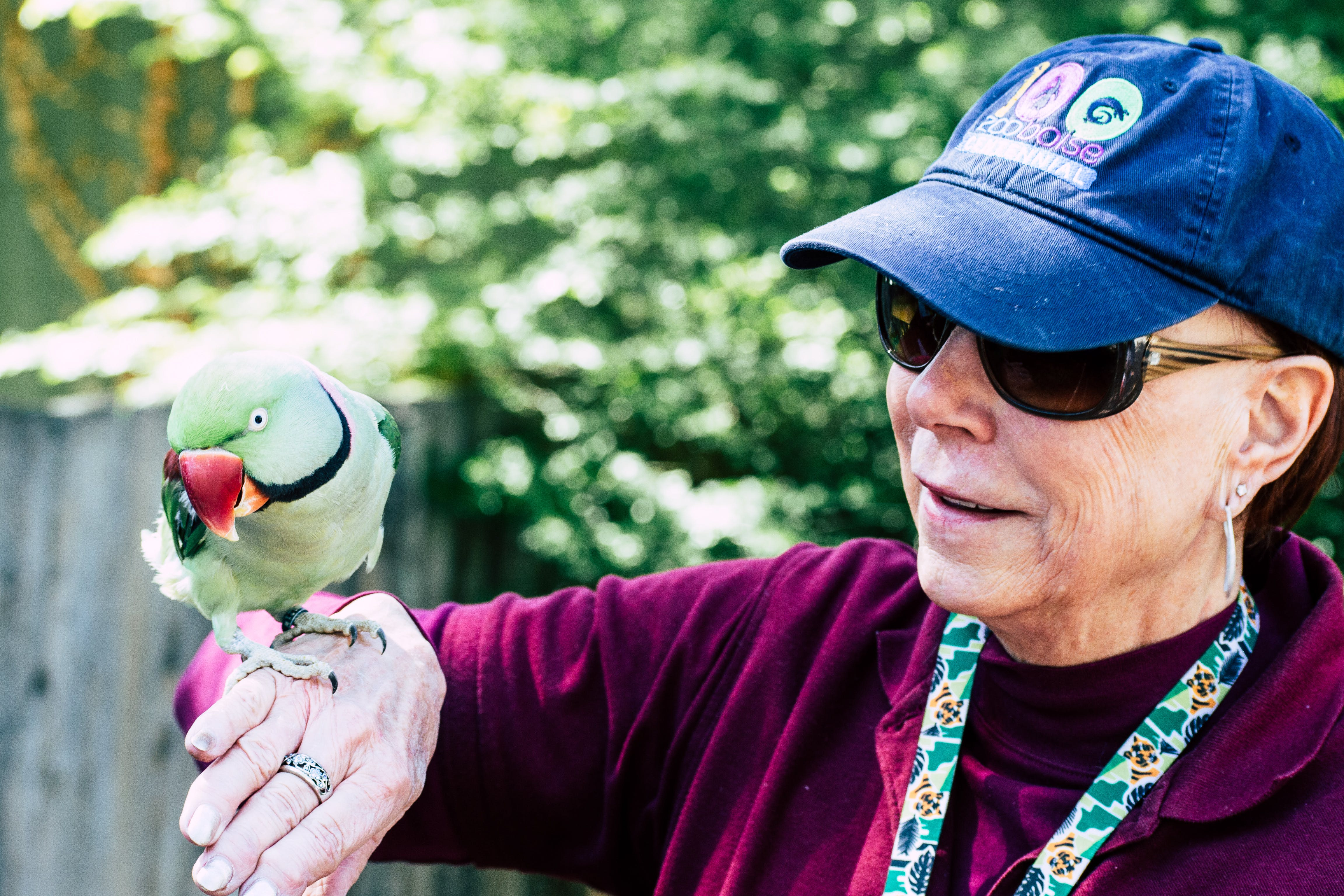 Woman Wearing Maroon Sweater and Blue Cap Raising Her Right Hand While Rose-ringed Parrot Perching on It