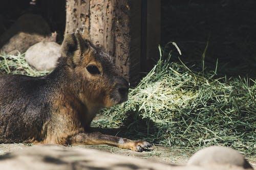 Ảnh lưu trữ miễn phí về ánh sáng ban ngày, cận cảnh, chụp ảnh động vật, cỏ