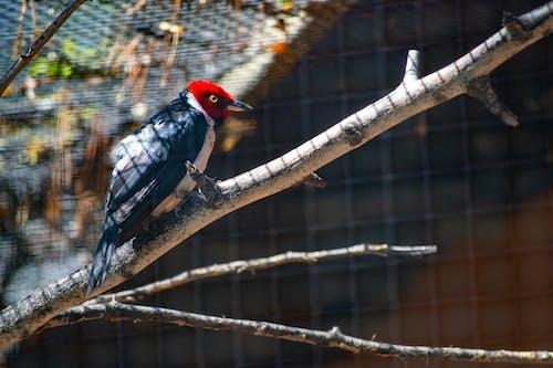 Foto stok gratis bertengger, binatang, bulu, bulu burung