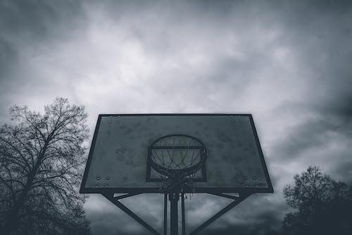 Foto d'estoc gratuïta de anell, anell de bàsquet, anella de la cistella de bàsquet, arbres