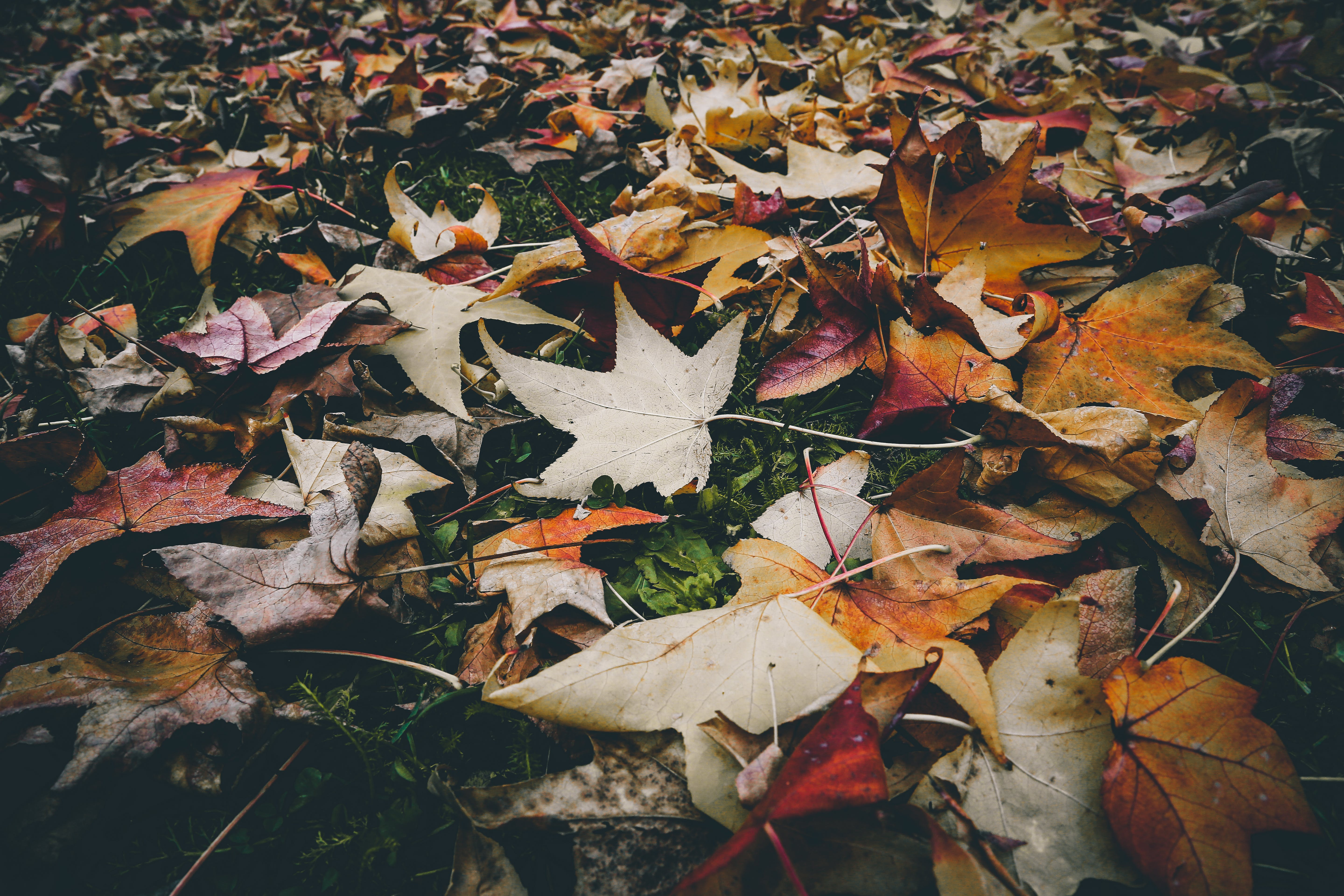 Withered Leaves on the Ground