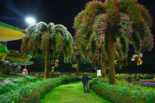 Základová fotografie zdarma na téma Dubaj, květinová zahrada, zázračná zahrada