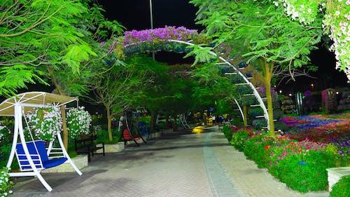 Darmowe zdjęcie z galerii z dubaj, ogród miracal, ogród z kwiatami