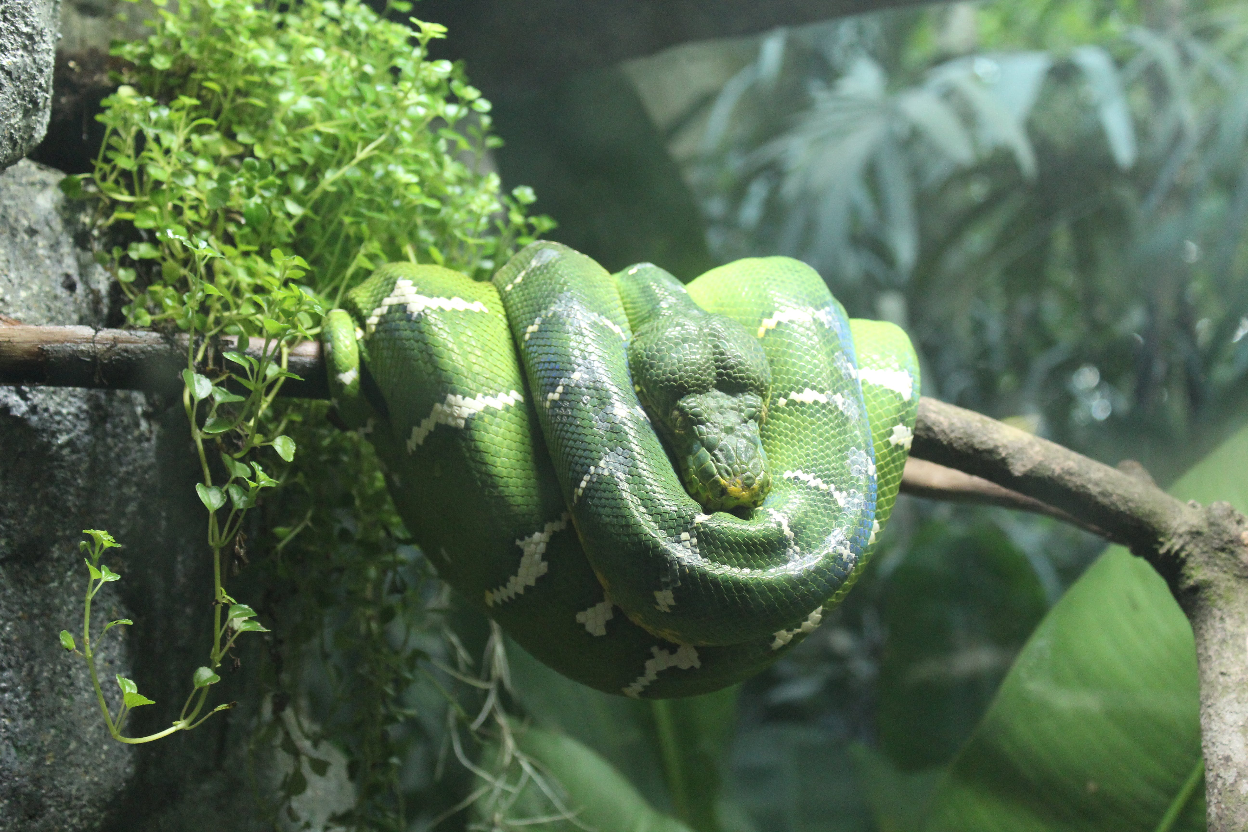 Green and White Snake on Branch