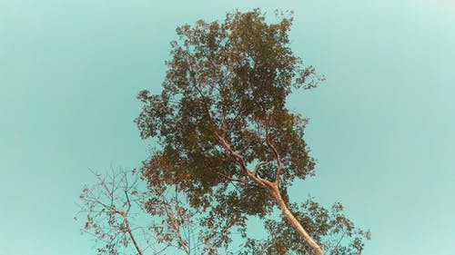 Low Angle Photo of Tree Under Cloudless Sky