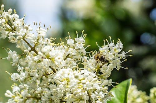 天性, 新鮮, 流動, 白色的花 的 免费素材照片