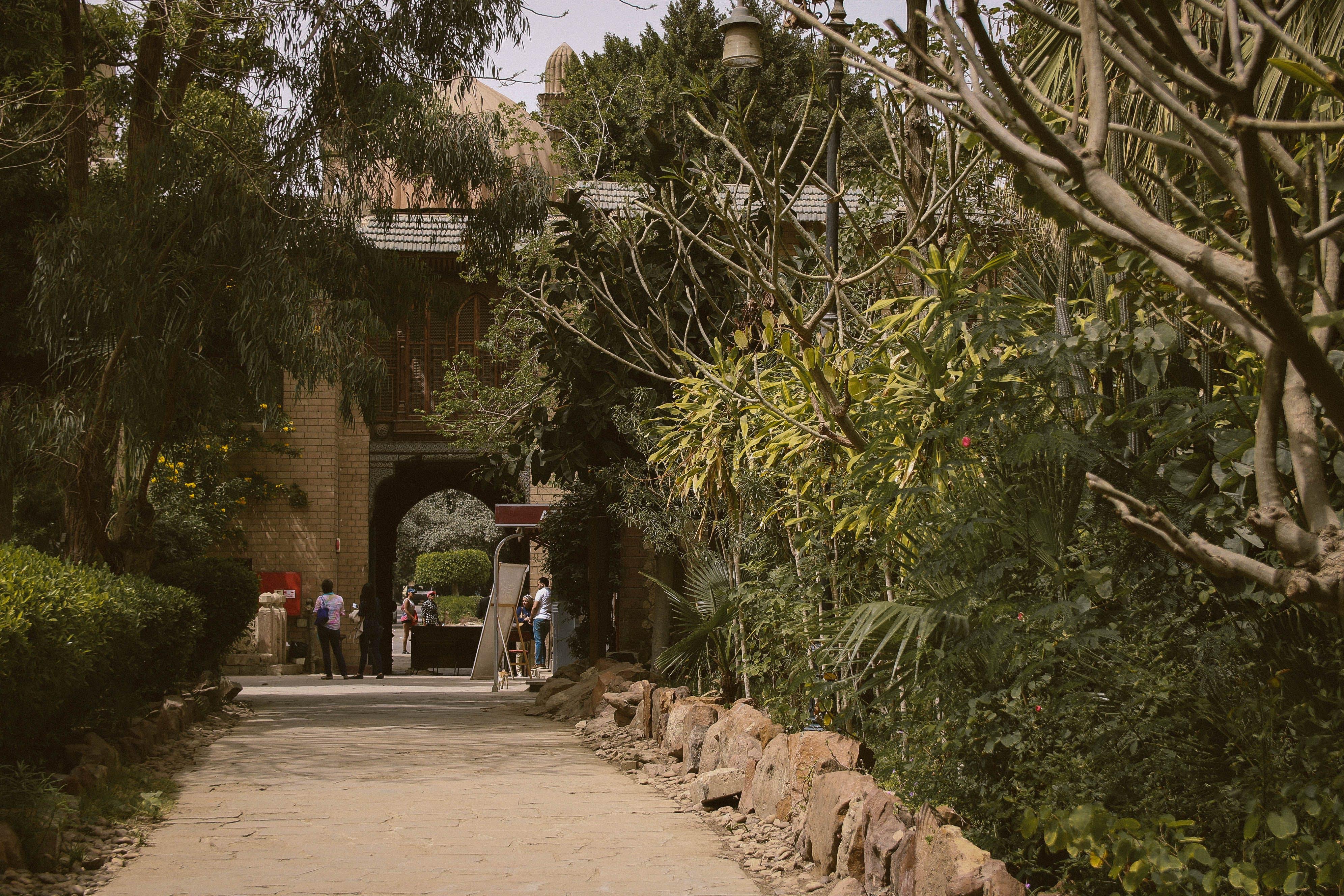 Foto d'estoc gratuïta de antic, arbres, arquitectura, Camí
