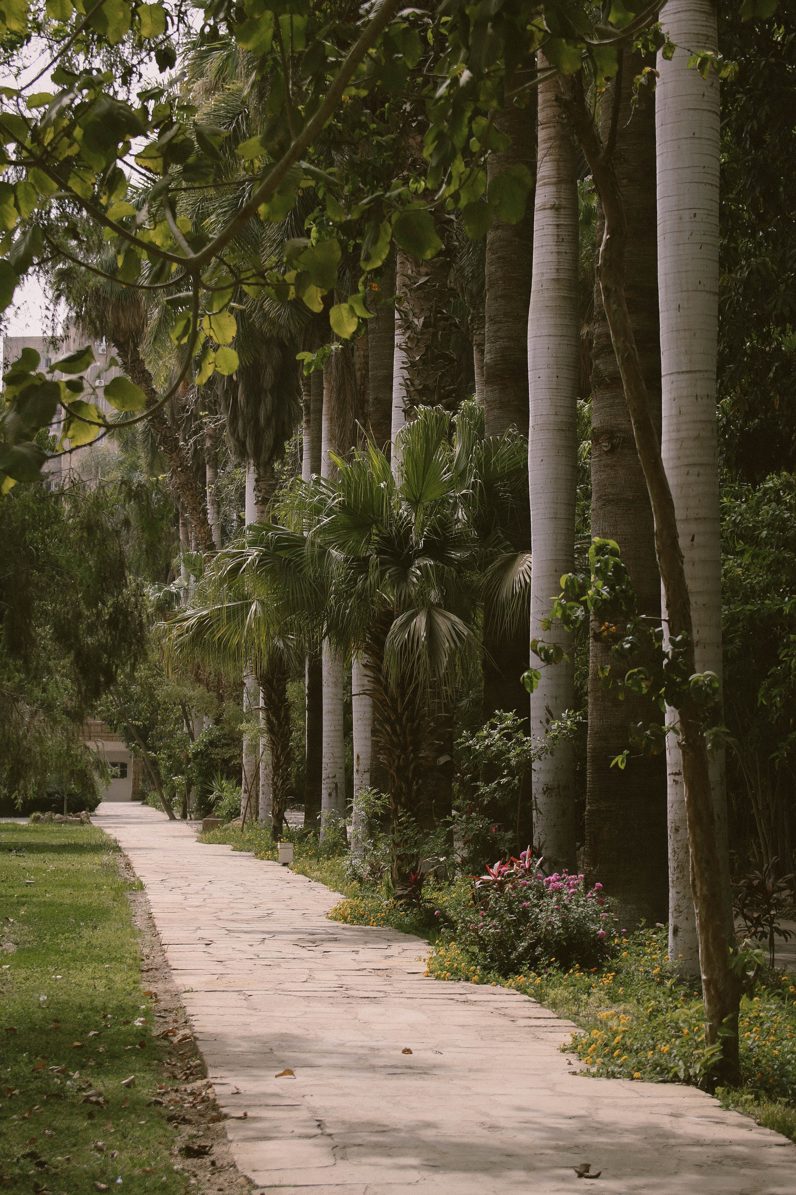 Palm Trees Beside Gray Paved Pathway