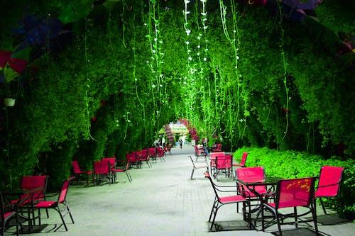 奇迹花园, 杜拜, 花園, 阿联酋 的 免费素材照片