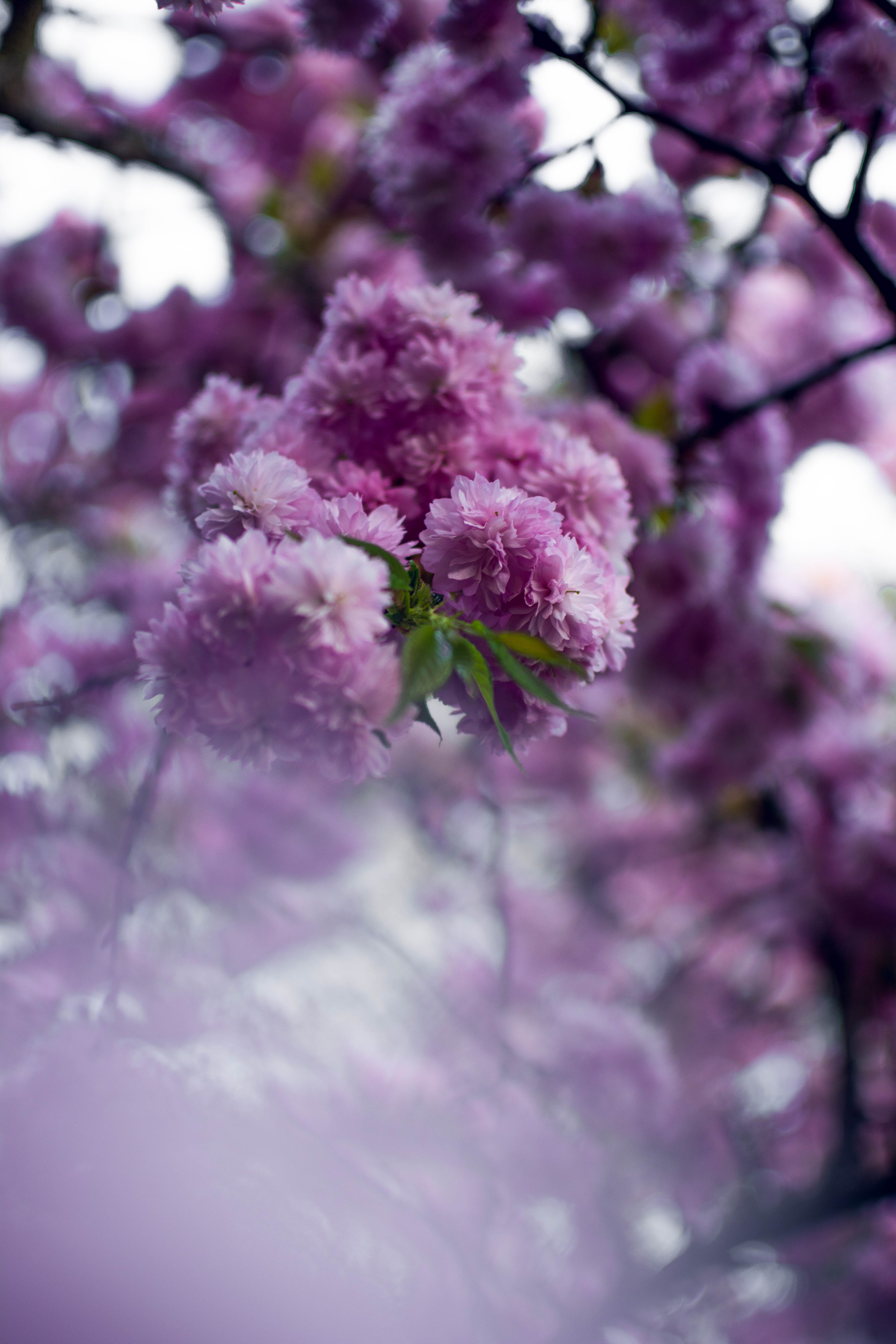 Closeup Photography Purple Clustered Flowers
