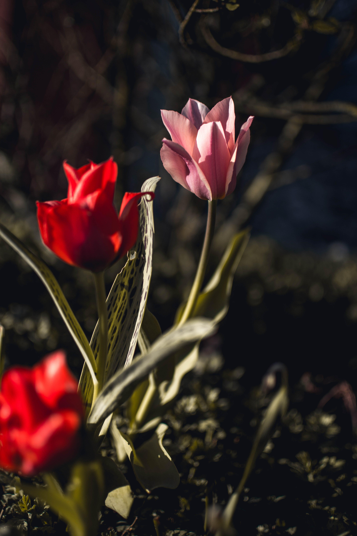 Gratis lagerfoto af blomster, blomstrende, farver, farverig