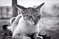 black-and-white, nature, animal
