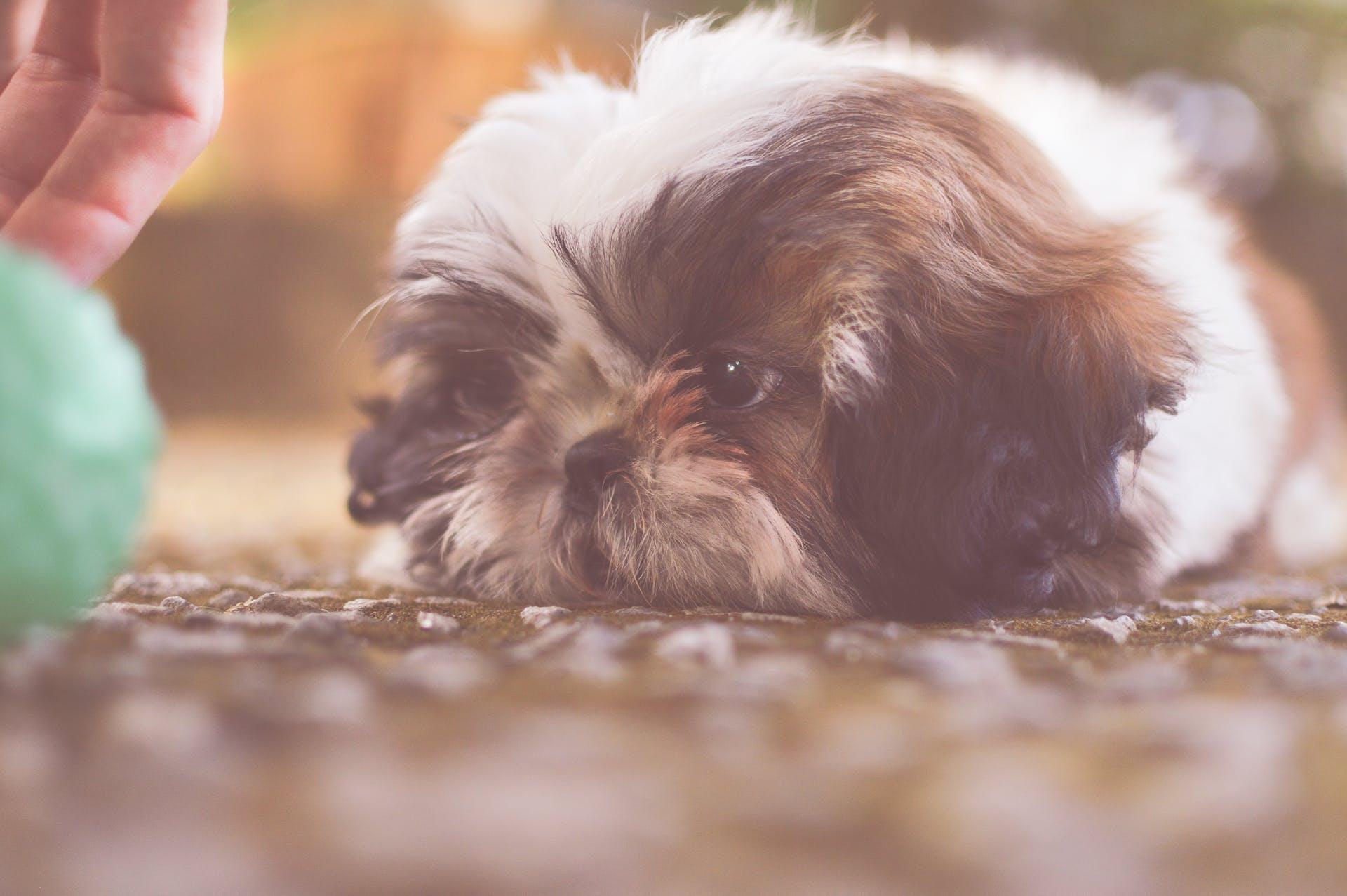 animal, blur, canine
