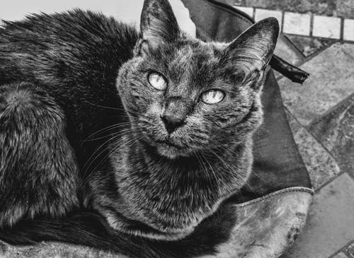 グレー, ネコ, ひげ, フォーカスの無料の写真素材