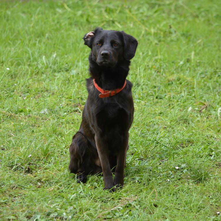 animal de compagnie, canin, chien assis