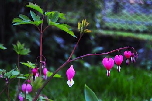 Gratis lagerfoto af blomster, blomstrende, close-up, farve