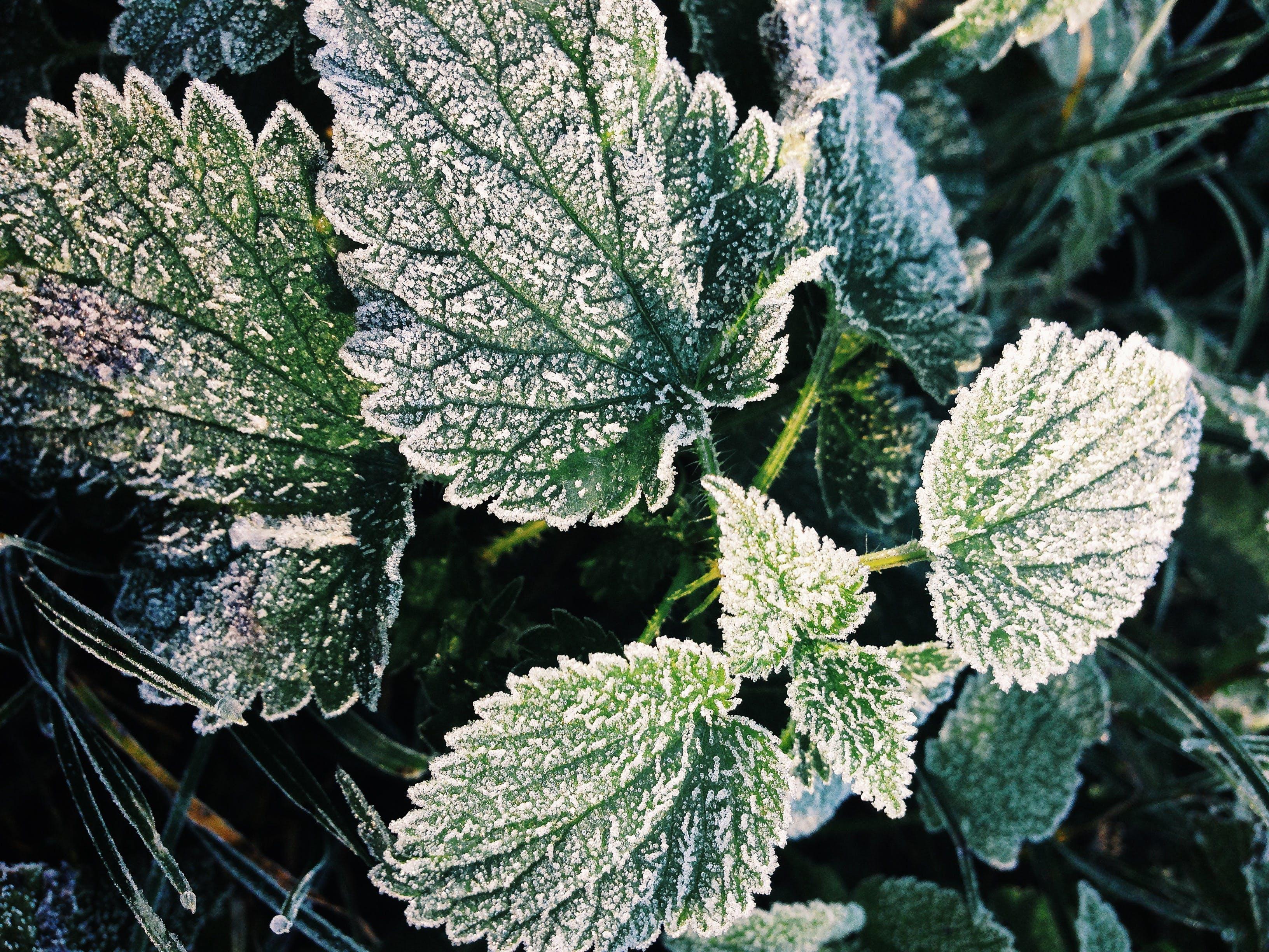 색깔, 식물군, 식물의, 신선의 무료 스톡 사진