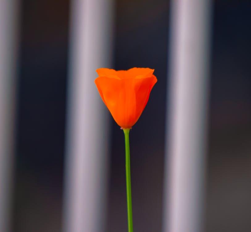 alam, berkembang, bunga
