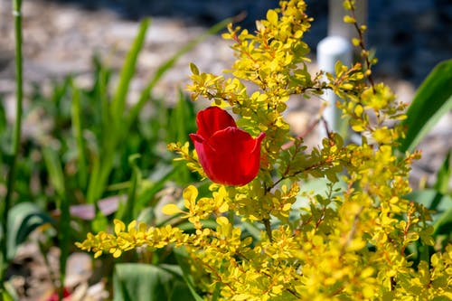 Free stock photo of cody simpson flower, corpse flower, diy, flower