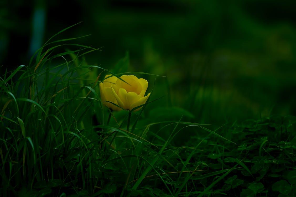 cody simpson λουλούδι, diy, αρχαίο λουλούδι φροντιστήριο