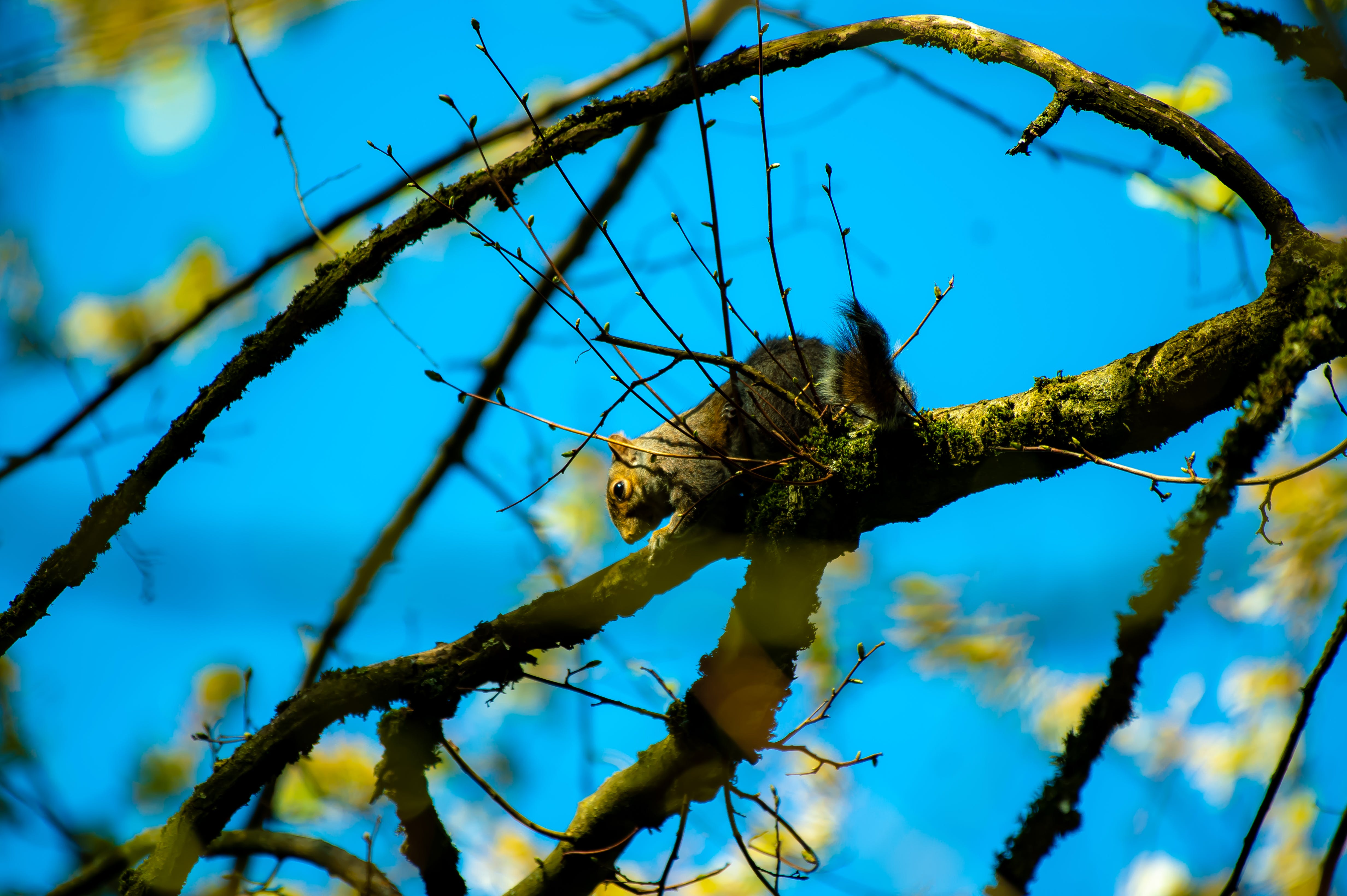 Brown and Gray Squirrel on Brown Tree Branch