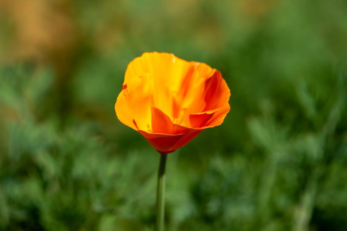 cody simpsonová květina, hudba, jak