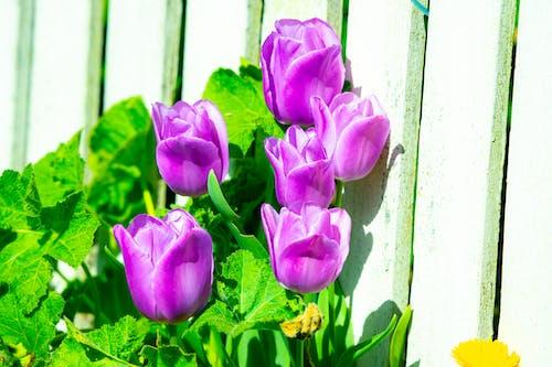 Gratis arkivbilde med blomst, blomst adam scott, blomst film trailer, blomst ridder jente