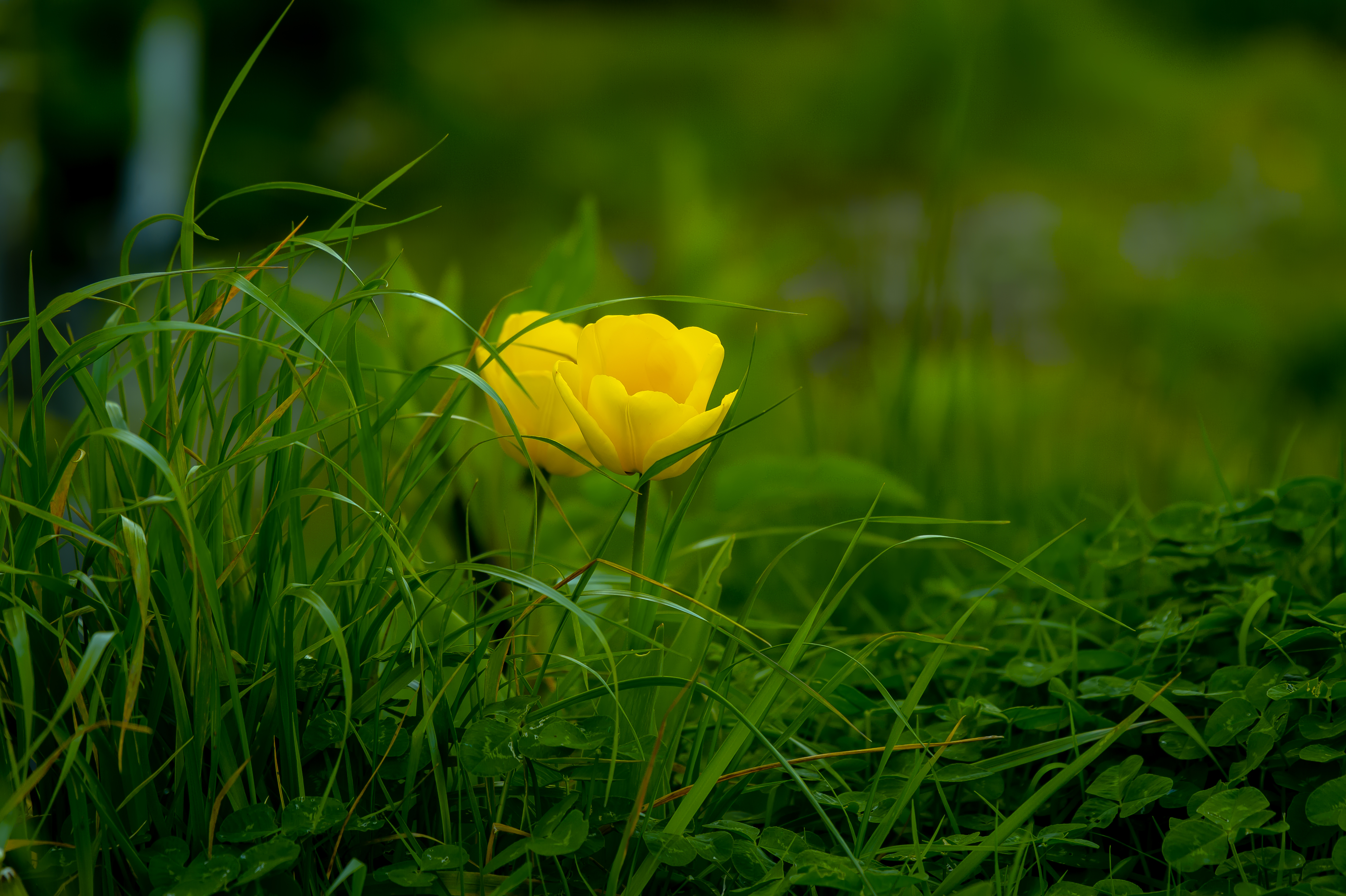 Yellow Flowering Green Plants