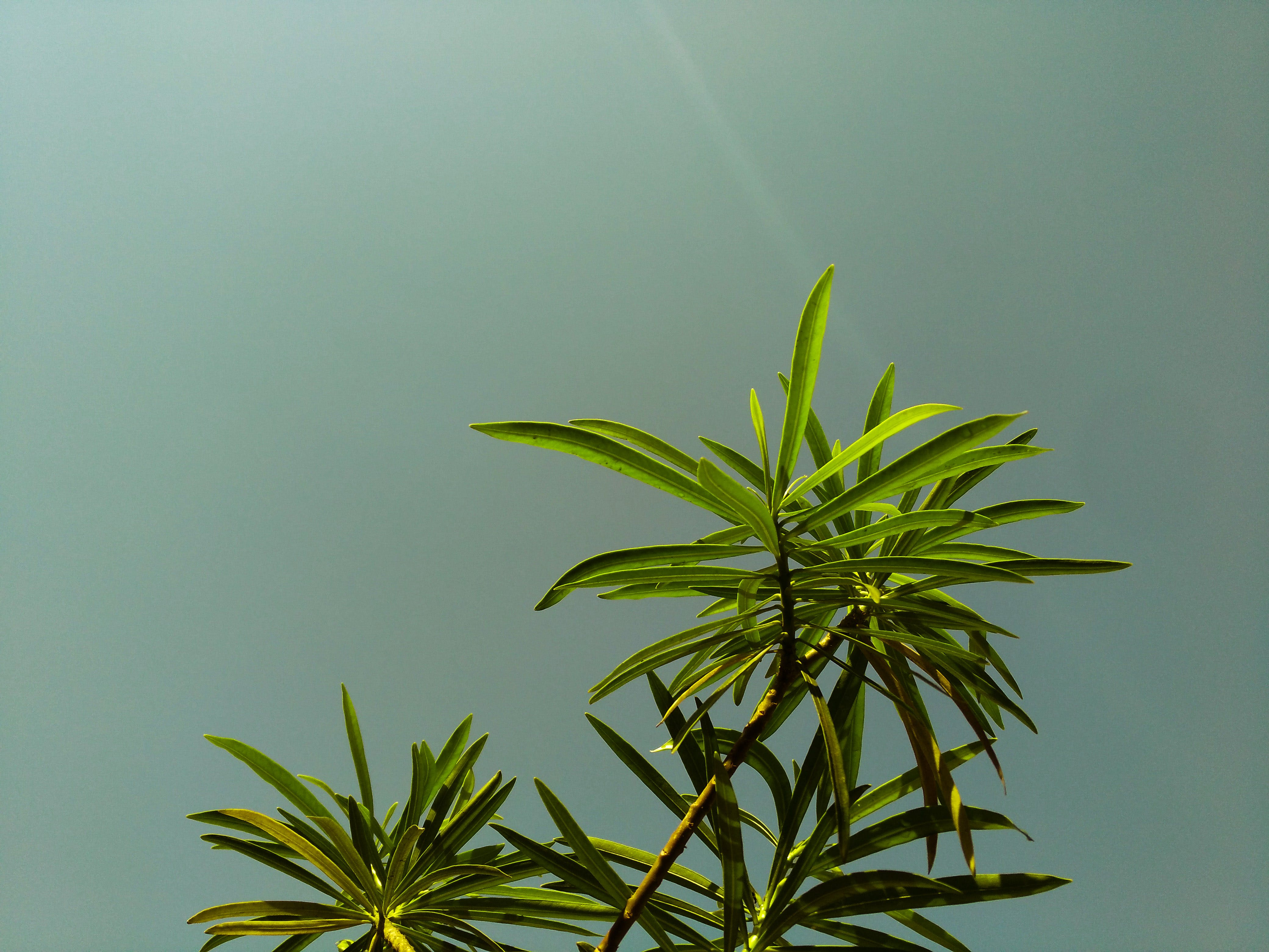 Low Angle Shot of Green Leaf Plant Under Gray Sky