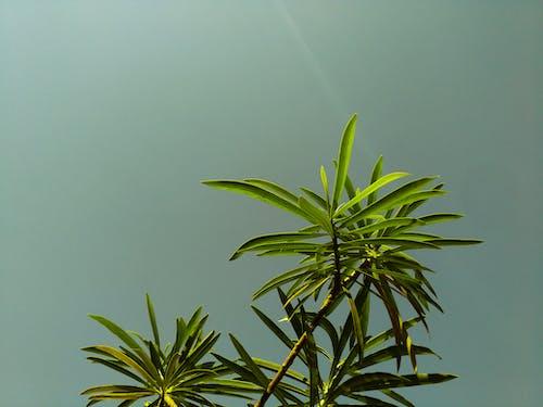 Безкоштовне стокове фото на тему «Денне світло, жаб'яча перспектива, завод, зелений»