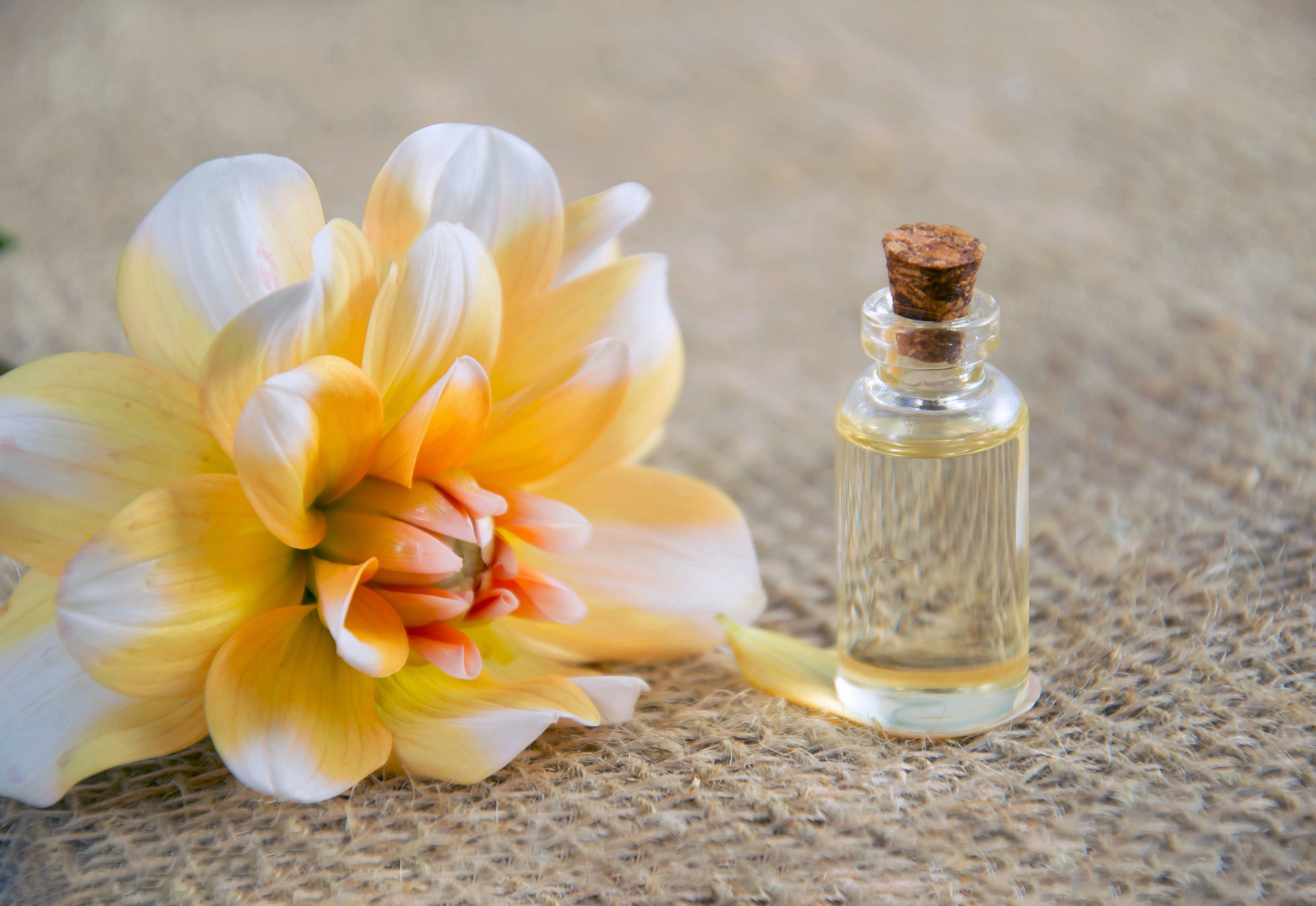 Close-Up Photo of White and Yellow Flower Near Glass Bottle