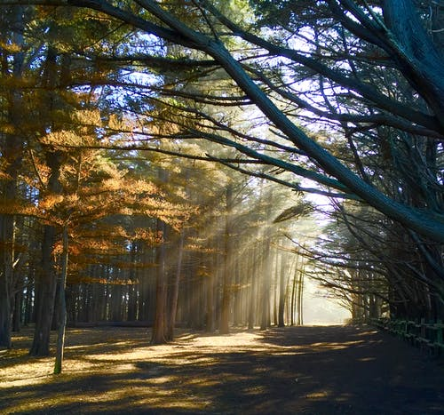 Photo of Crepuscular Rays Through Trees
